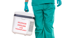 transplant2